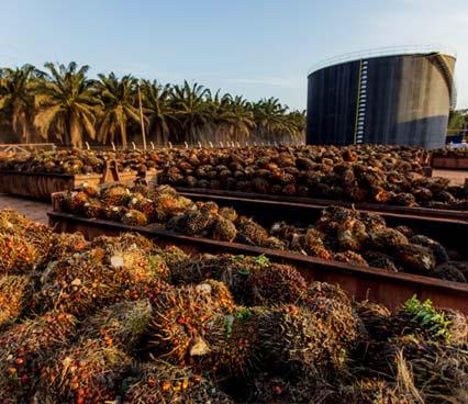 Fruto da palmeira será armazenado em contêineres de inox