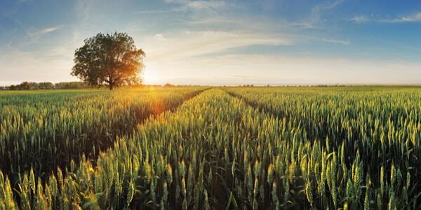 Paisagem de agricultura